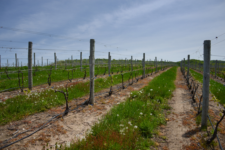 One of the vineyards at 45 North.